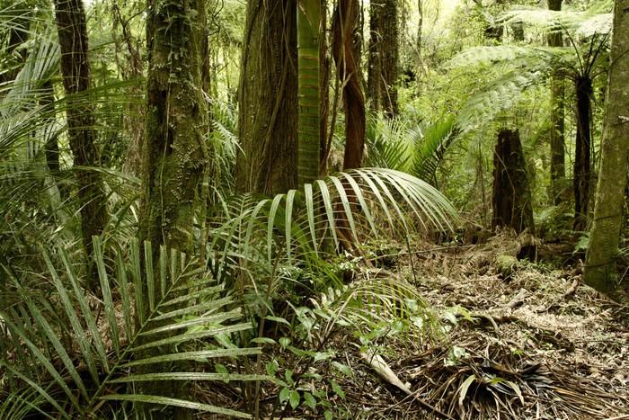 Papier Peint Vinyle Jungle tropical - Thèmes