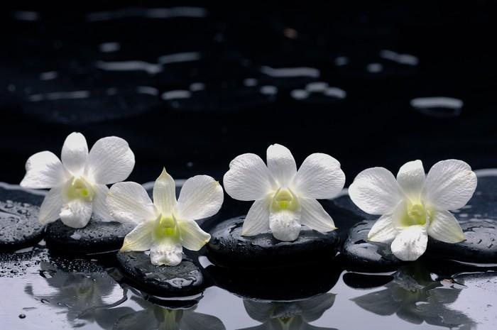 Vinylová Tapeta Čtyři Bílá orchidej s kameny a mokré pozadí - Životní styl, péče o tělo a krása
