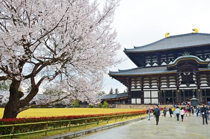 Vinylová Tapeta Sakura ve Chrám Todaidži - Asie