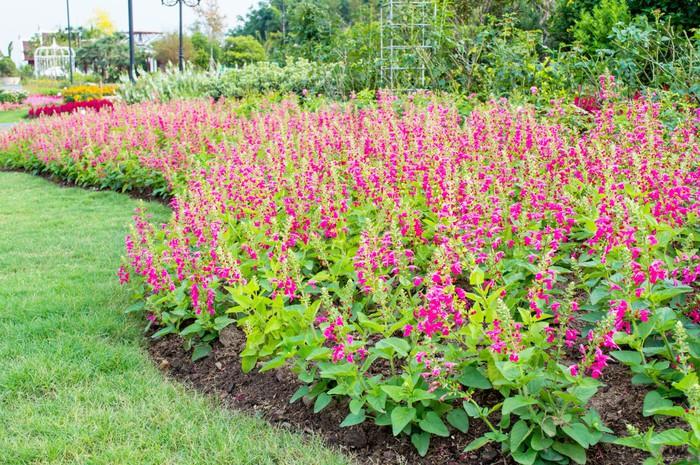 Vinylová Tapeta Docela pěstěné květinová zahrada - Rostliny