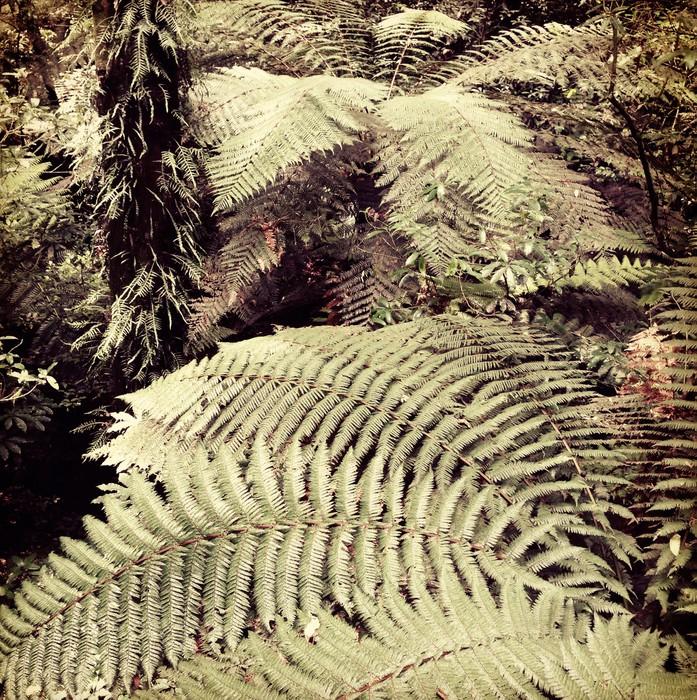 Vinylová Tapeta Fern stromy - Lesy