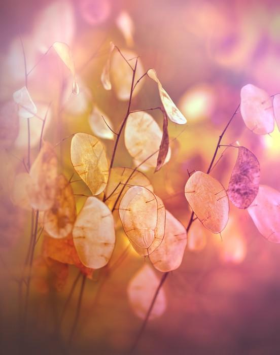 Nálepka Pixerstick Krásné suchých rostlin - semena na podzim - Roční období