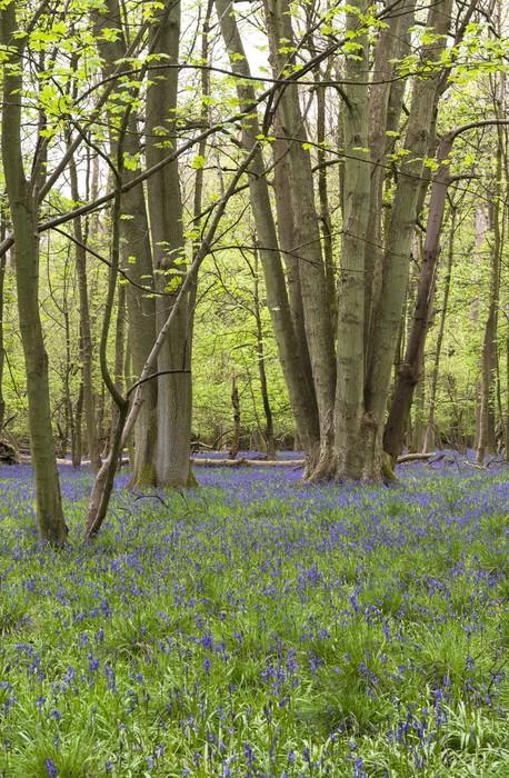 Vinylová Tapeta Hyacinty květy v lese na jaře - Stromy
