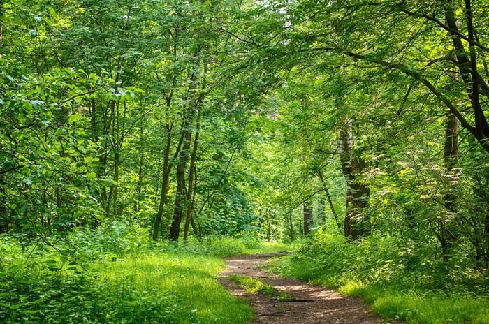 Fototapete waldweg  Fototapete Waldweg • Pixers® - Wir leben, um zu verändern