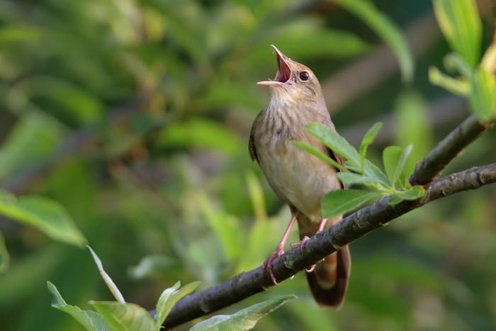 звуки природы шелест листвы пение птиц морские волны