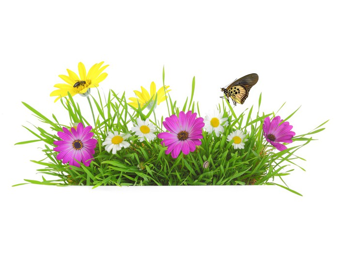 Green grass with pink white and yellow flowers isolated wall mural green grass with pink white and yellow flowers isolated vinyl wall mural seasons mightylinksfo