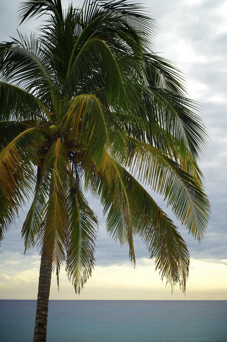 Vinylová Tapeta Tropické slunce - Amerika