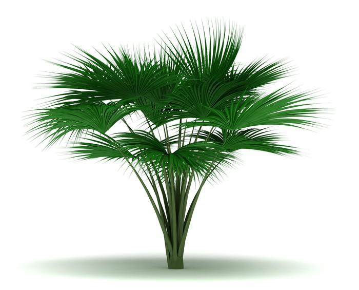 Nálepka Pixerstick Single Sea kokosová palma - Stromy a listí