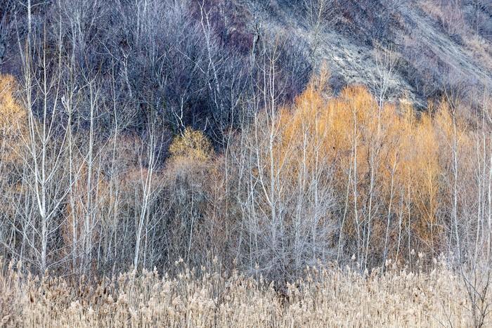 Vinylová Tapeta Zimní lesní pozadí - Lesy