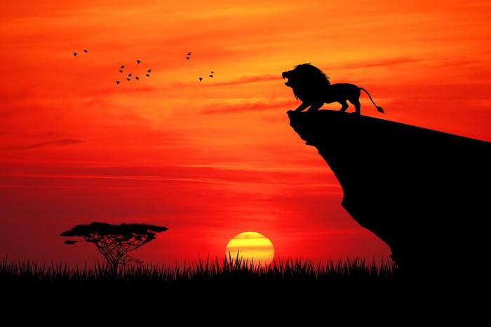 Tapeta Winylowa Lew na liny o zachodzie słońca - Tematy