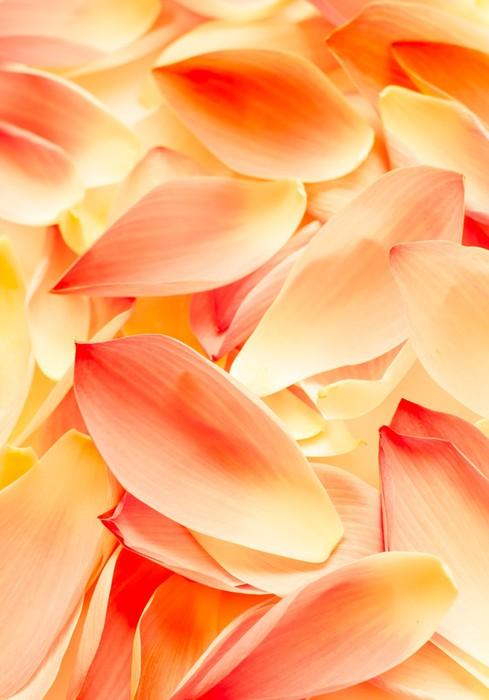 Vinylová Tapeta Lotus okvětní lístek jako pozadí, ozdobný colur - Struktury