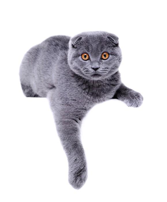 Aufkleber Katze Die Tatze Auf Leeren Brett Pixerstick