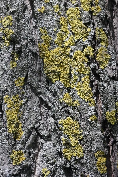 Vinylová Tapeta Мох на коре дерева - Struktury
