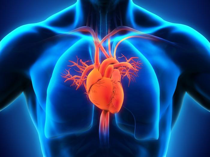 Autocolante pixerstick human heart anatomy pixers vivemos para autocolante human heart anatomy pixerstick ccuart Choice Image