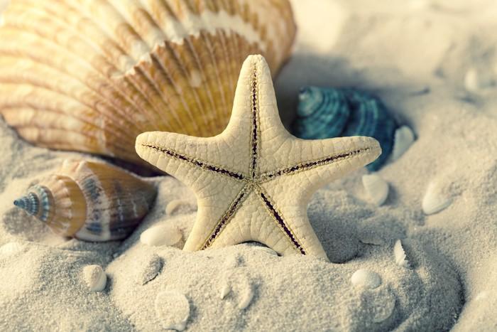 Carta da parati conchiglie e stelle marine sulla sabbia u pixers