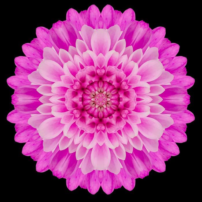Vinylová Tapeta Pink Mandala Flower Kaleidoskop izolované na černém - Květiny
