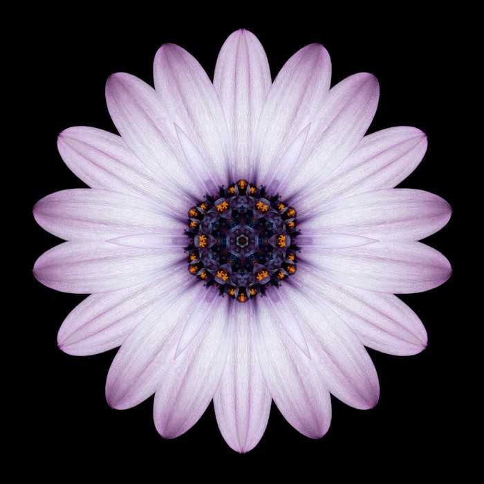 fototapete rosa lila blumen kaleidoskop mandala isoliert auf schwarz pixers wir leben um. Black Bedroom Furniture Sets. Home Design Ideas
