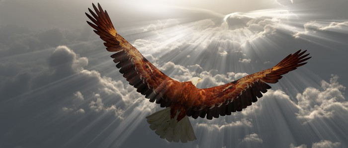 Eagle In Flight Above The Clouds Wall Mural Pixers 174 We