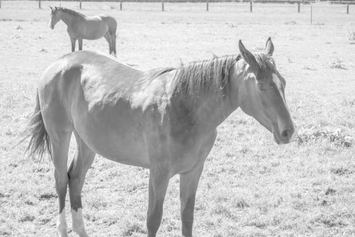 Vinylová Tapeta Kůň a kůň - Zemědělství