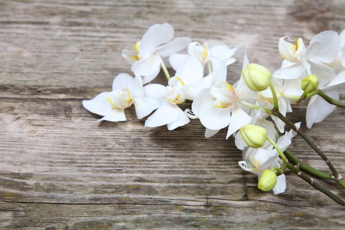 Vinylová Tapeta Bílá orchidej (Phalaenopsis) - Témata