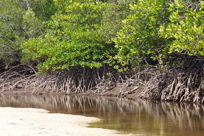 Papier Peint Vinyle Paysage tropical de la forêt de mangrove du sud de la Thaïlande - Merveilles naturelles