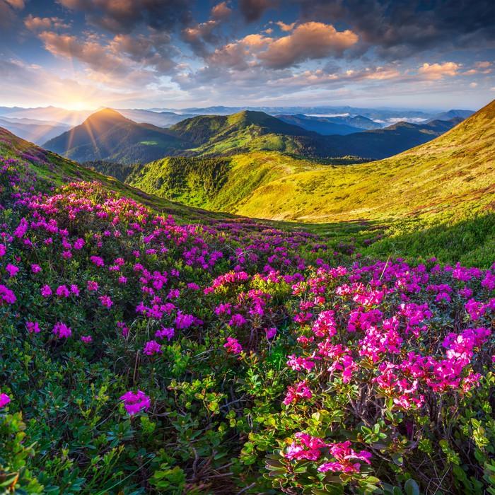 Carta da parati magia fiori rosa rododendro in montagna for Carta da parati per casa in montagna