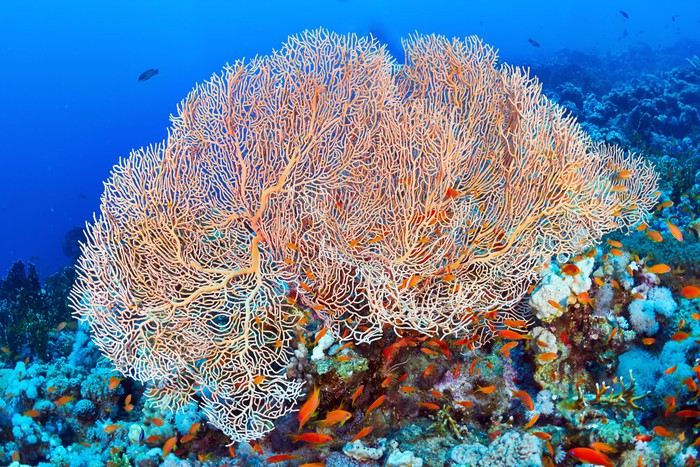 Hicksons fan coral wall mural pixers we live to change hicksons fan coral vinyl wall mural aquatic and marine life publicscrutiny Images