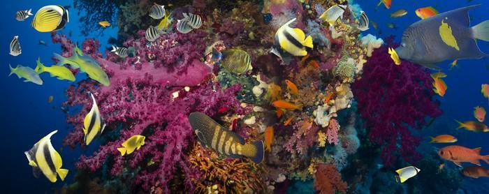 Vinylová Tapeta Korály a ryby - Vodní a mořský život