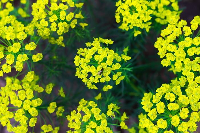 Vinylová Tapeta Bush s malými květy - Květiny