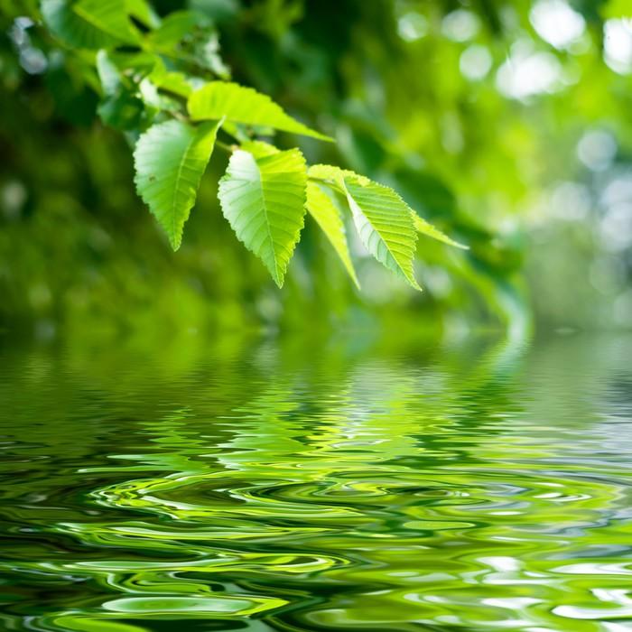 Carta da parati natura zen pixers viviamo per il for Carta parati natura