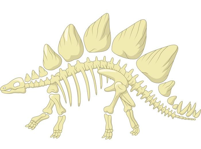 Tableau Sur Toile Stegosaurus Squelette • Pixers