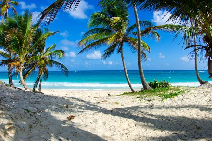 Vinylová Tapeta Caribbean beach - Voda
