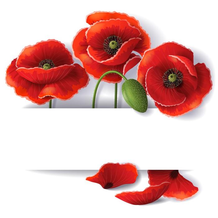 Vinylová Tapeta Červené květy máku - Květiny