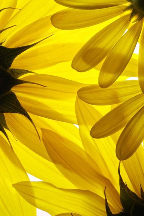 papier peint fleurs jaunes de fond pixers nous vivons. Black Bedroom Furniture Sets. Home Design Ideas