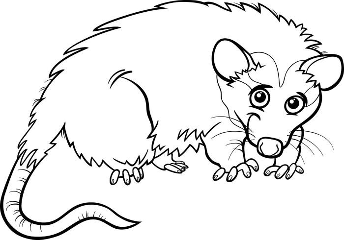 Vinilo Pixerstick Animales zarigüeya libro para colorear de dibujos ...