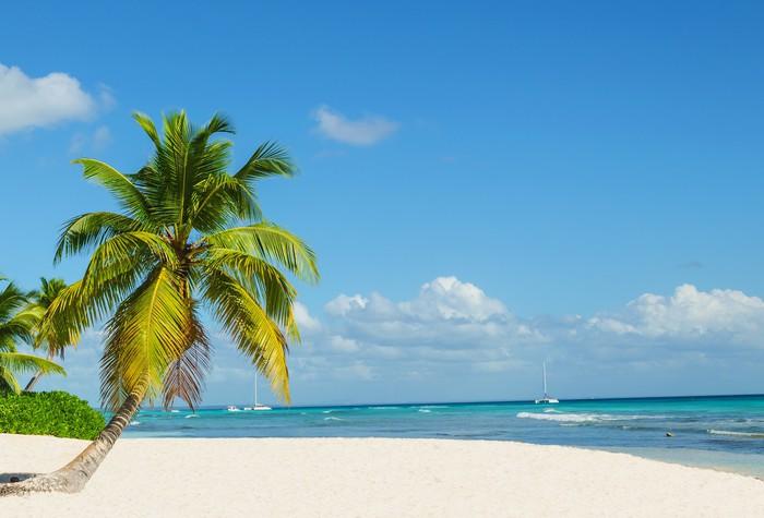 palmier ocean 66