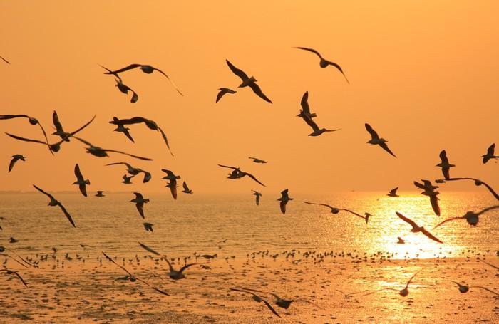 tableau sur toile flying birds contre orange coucher de soleil pixers nous vivons pour changer. Black Bedroom Furniture Sets. Home Design Ideas