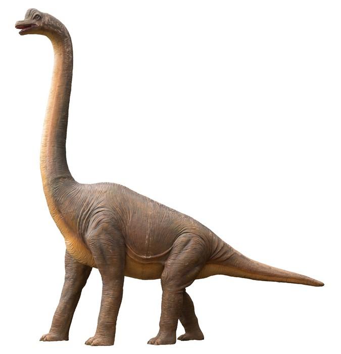 fototapete sauropoddinosauriers pixers wir leben um zu ver ndern. Black Bedroom Furniture Sets. Home Design Ideas