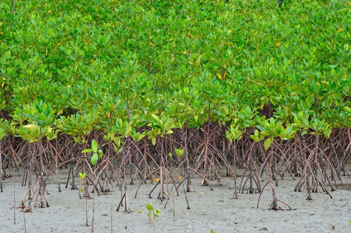 Vinylová Tapeta Krásné mangrove plantáže na moři s kořeny ukazující - Roční období