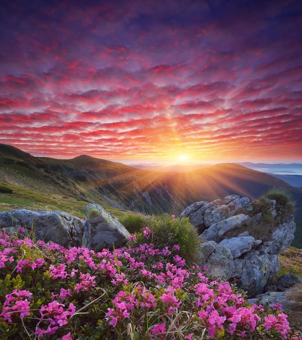 Carta da parati alba con fiori in montagna pixers for Carta da parati per casa in montagna