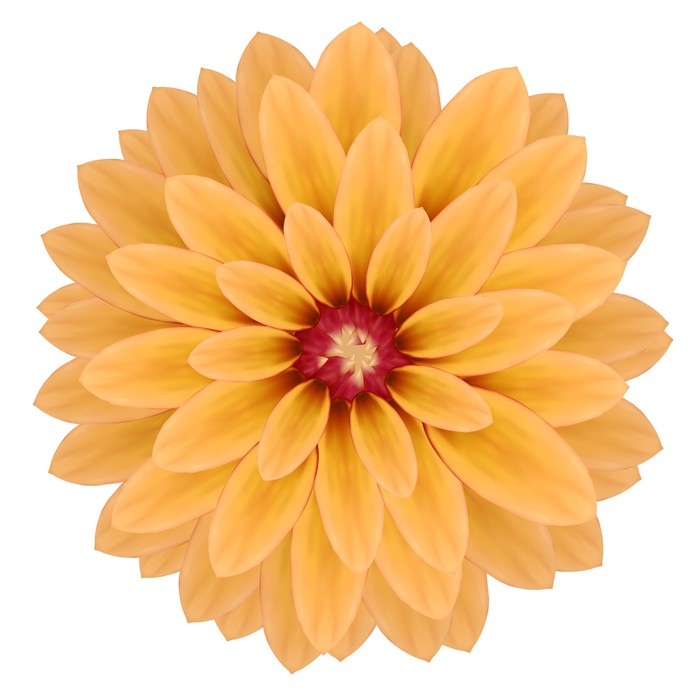 papier peint fleur rose de chrysanth me r aliste isol sur fond blanc pixers nous vivons. Black Bedroom Furniture Sets. Home Design Ideas