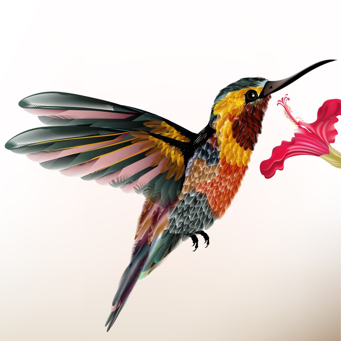 colibri malsch abkürzung fo