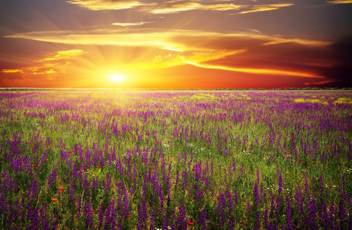 tableau sur toile champ d 39 herbe de fleurs de violette et de coquelicots rouges contre le. Black Bedroom Furniture Sets. Home Design Ideas
