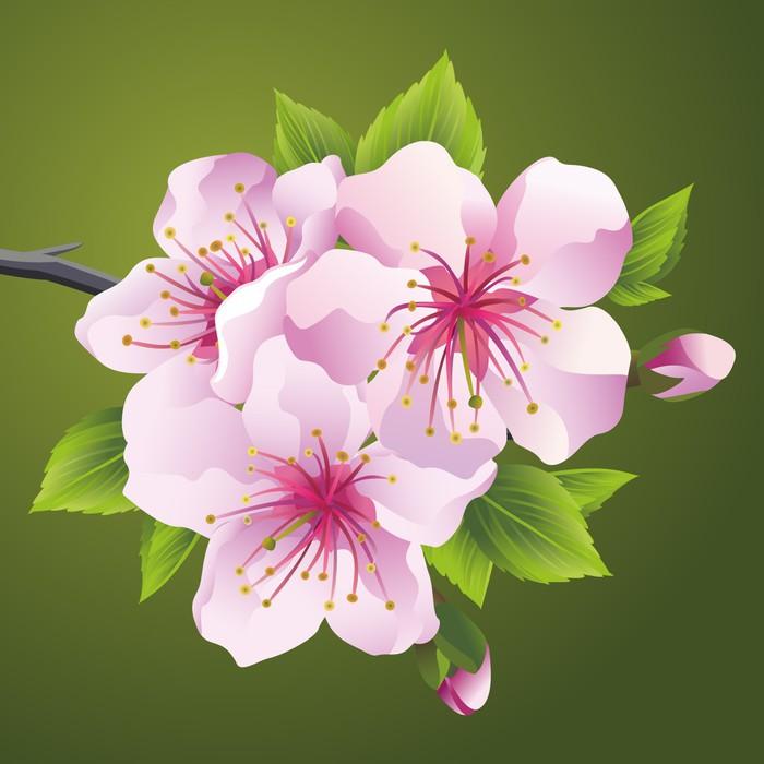 Vinylová Tapeta Kvetoucí větev stromu japonské sakury - Květiny