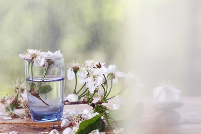 Carta Da Parati Fiori Di Ciliegio : Carta da parati fiori di ciliegio e rami sfondo verde fogliame