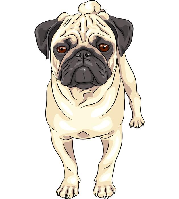 Vinylová Tapeta Vektor skica roztomilý pes mops plemeno - Nálepka na stěny