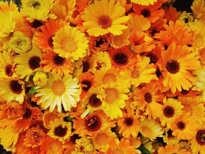 Vinylová Tapeta Gerbery pomerančový žlutých - Květiny