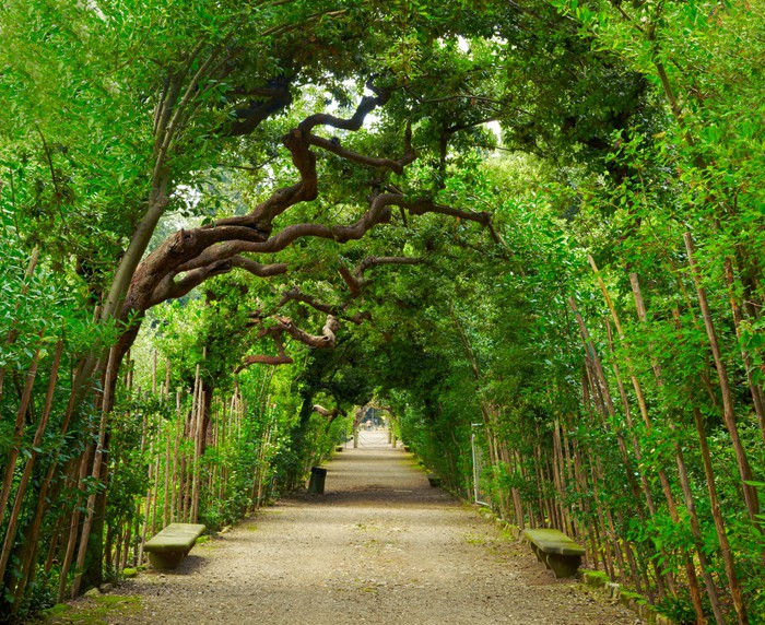 Boboli Gardens. Florence Italy Wall Mural • Pixers® • We live to change