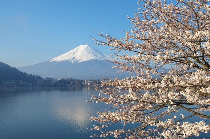 Vinylová Tapeta Horské Fuji v třešňového květu sakura sezóny - Témata