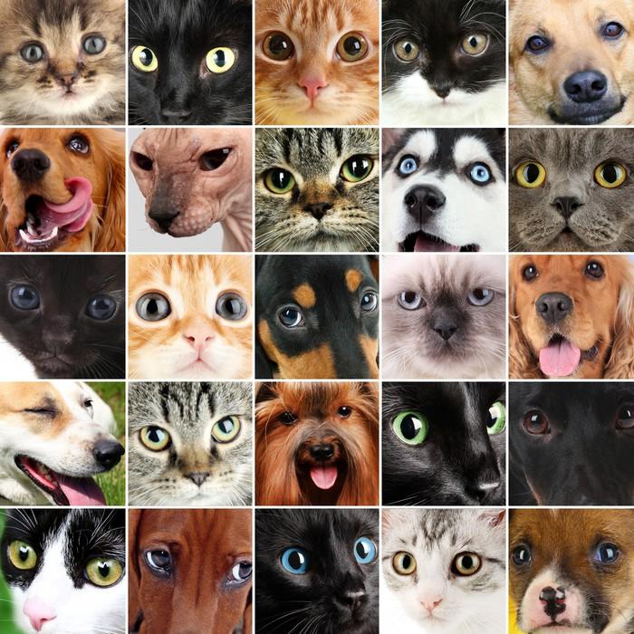 Vinilo Pixerstick Collage de diferentes tiernas mascotas • Pixers ...
